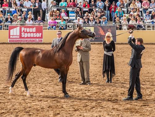 DA Prodigy Winning Reserve Champion